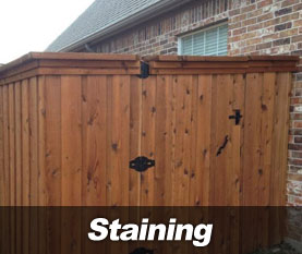 staining